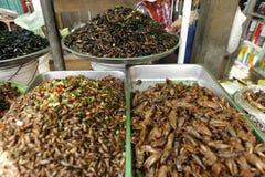 Inseto Camboja do alimento Foto de Stock
