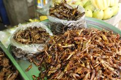 Inseto Camboja do alimento Imagem de Stock Royalty Free