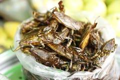 Inseto Camboja do alimento Fotografia de Stock Royalty Free