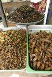 Inseto Camboja do alimento Imagem de Stock