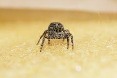 Inseto da aranha Imagem de Stock Royalty Free