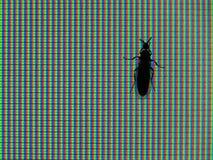 Inseto do monitor do RGB Imagens de Stock