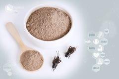 Inseto do pó do grilo para comer como os alimentos feitos da carne cozinhada do inseto na bacia no fundo da nutrição dos ícon imagens de stock royalty free