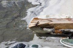 Inseto em um fazer logon de madeira o banco de um córrego, Altai, Rússia fotos de stock