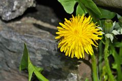 Inseto em uma flor Fotografia de Stock