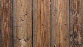 Inseto na cerca de madeira filme