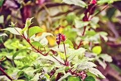 Inseto na flor e no nactor da sugação Fotografia de Stock Royalty Free