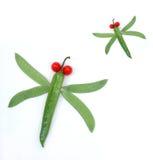 Inseto vegetal Imagem de Stock