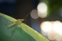 insetos Fotos de Stock