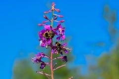 insetos Fotografia de Stock Royalty Free