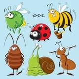 insetos Imagem de Stock Royalty Free