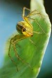 insetos Imagens de Stock Royalty Free