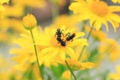 insetos Foto de Stock