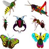 insetos Foto de Stock Royalty Free