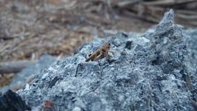insetos da natureza Foto de Stock Royalty Free