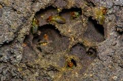 Insetos das térmitas na colônia sobre a madeira dentro da floresta úmida de amazon no parque nacional de Cuyabeno, em Equador Imagem de Stock