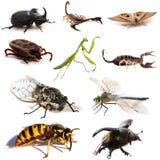 Insetos e escorpião Fotografia de Stock Royalty Free