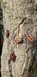 insetos travados no ato fotos de stock royalty free