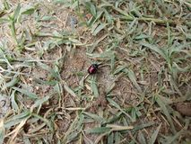 insetti Immagine Stock Libera da Diritti