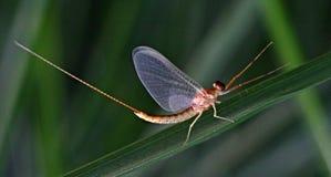 insetti Immagini Stock
