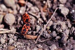 insetti Immagini Stock Libere da Diritti