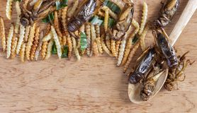 Insetti commestibili di bambù del verme croccanti e grilli su una tavola di legno Il concetto delle fonti dell'alimento della pro fotografia stock libera da diritti