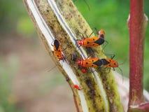 insetti dalla faccia uomo sulla pianta Fotografia Stock