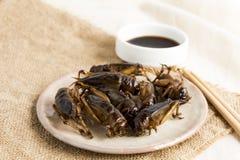 Insetti dell'alimento: Croccante fritto insetto del grilli per il cibo poichè i prodotti alimentari è buona fonte di commestibile immagini stock
