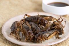 Insetti dell'alimento: Croccante fritto insetto del grilli per il cibo poichè i prodotti alimentari è buona fonte di commestibile fotografia stock