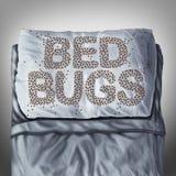 Insetti di letto sul cuscino illustrazione vettoriale
