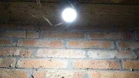 Insetti di notte ad una lampadina archivi video