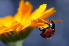 Insetti nella natura Fotografie Stock