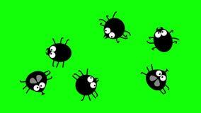Insetti neri divertenti che strisciano sullo schermo verde, 2d cartone animato, senza cuciture illustrazione di stock