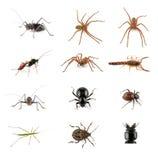 Insetti, ragni e scorpione Fotografia Stock Libera da Diritti