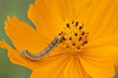 Insetti sui fiori nello stato naturale Fotografia Stock