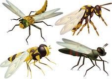 Insetti una libellula una mosca illustrazione vettoriale