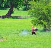 Insetticida dello spruzzo degli agricoltori nel giacimento del riso Fotografie Stock