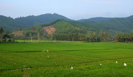 Insetticida di spruzzatura dell'agricoltore asiatico Fotografia Stock
