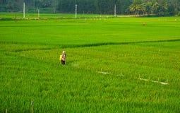 Insetticida di spruzzatura dell'agricoltore asiatico Fotografia Stock Libera da Diritti