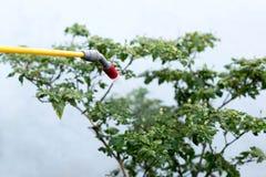 Insetticida di spruzzatura dell'agricoltore sulla pianta dei peperoncini rossi Immagini Stock Libere da Diritti