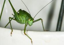 insetto fotografie stock
