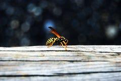 insetto Immagini Stock
