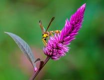 insetto Immagini Stock Libere da Diritti