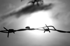 Insetto che cammina la linea Fotografia Stock Libera da Diritti