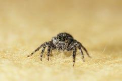 Insetto del ragno Immagine Stock Libera da Diritti
