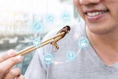 Insetto dell'alimento: La mano dell'uomo che tiene i bastoncini che mangiano l'insetto del cricket fritto nel grasso bollente com fotografia stock libera da diritti