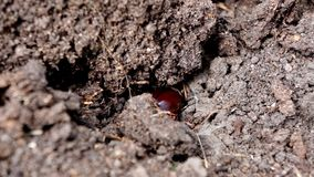 Insetto dello scarabeo nave al giardino archivi video