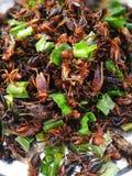 insetto fritto in Tailandia Fotografie Stock