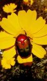 insetto fotografia stock