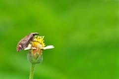 Insetto nel giardino verde della natura Fotografia Stock